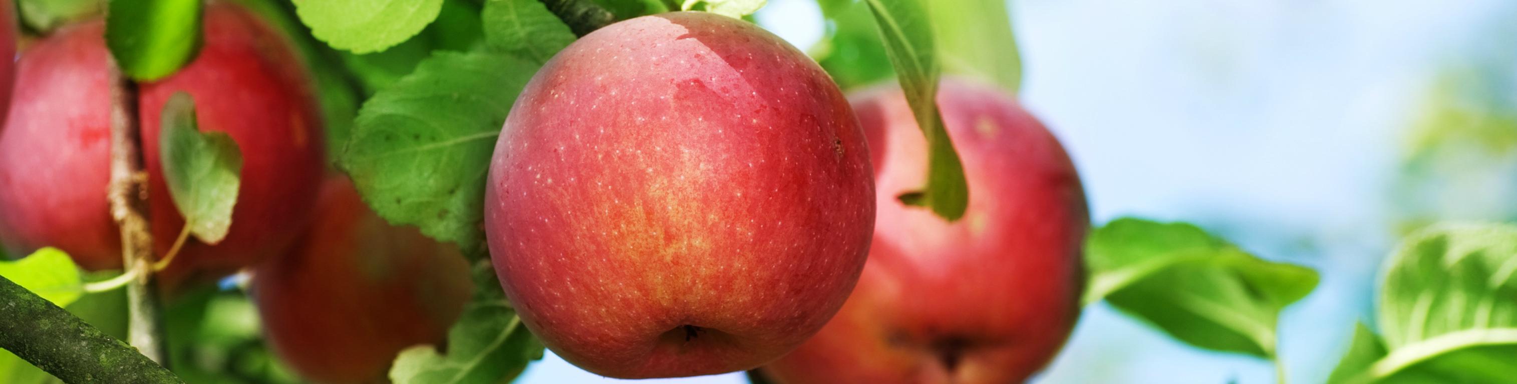 Seguro Vides, Manzanas y Peras
