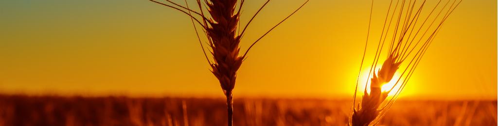 Seguros Agrícolas, cultivos anuales y flores
