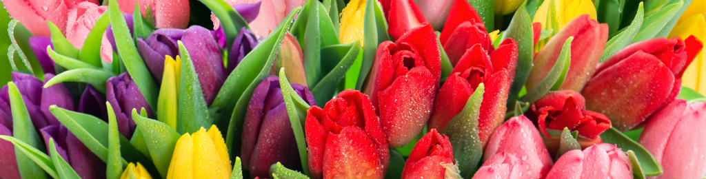 Seguro de Flores