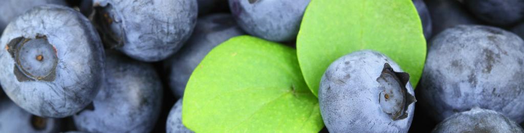 Seguro Berries, Kiwis y Frambuesas